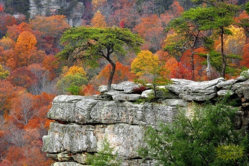Tree_on_a_cliff
