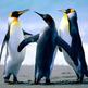 Medium_penguins