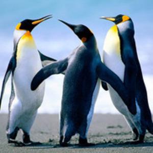 Profile_penguins